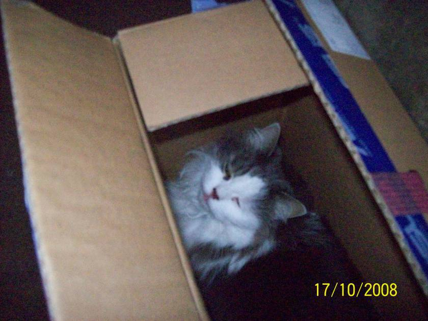 Meeloo has an unusual fondness for boxes